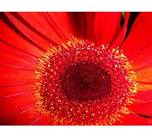 Red Raw Photographic Print
