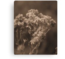 Softly Came the Afternoon Canvas Print
