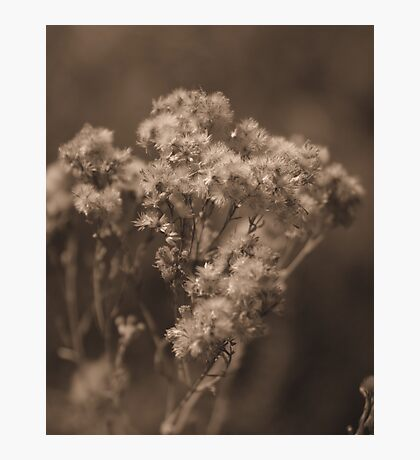 Softly Came the Afternoon Photographic Print