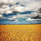Golden Harvest by Jeff Davies