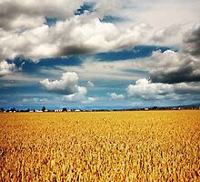 Golden Harvest by Jeff Davies