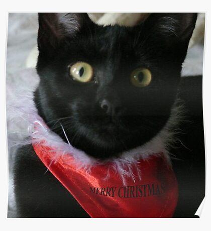 Chrissy Cat Poster