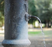 No Water Restrictions Here by Fiasco