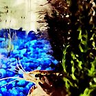 Crayfish in Waiting by wolfshark2015