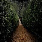 Wraith in the Maze by Rhana Griffin