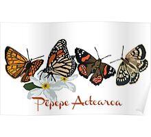 Pepepe Aotearoa Poster