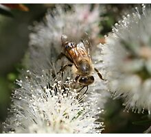 Bee July 2010 Photographic Print