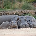 Family of Hippos Sleeping by Joseph Bailouni