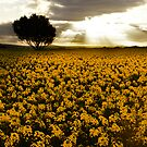 Crops of gold by Paul Grinzi