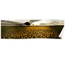 Crops of gold Poster