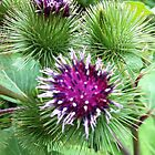 PURPLE THISTLE by pogart2000