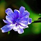 Little Blue by Richard Hamilton-Veal
