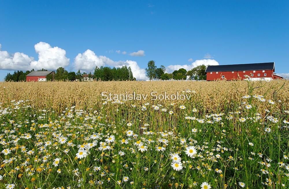 Oat Farm and Daisies  by Stanislav Sokolov