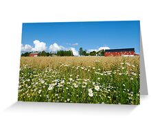 Oat Farm and Daisies  Greeting Card