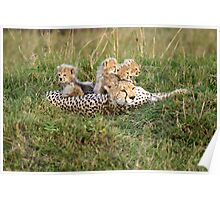 One happy cheetah family Poster