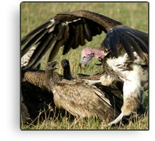 Vulture fight Canvas Print