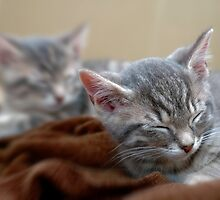Twins sleeping by Jackco  Ching