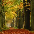 My first November lane by jchanders