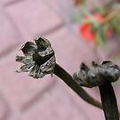 Dead Flowers by Rachel Hoffman