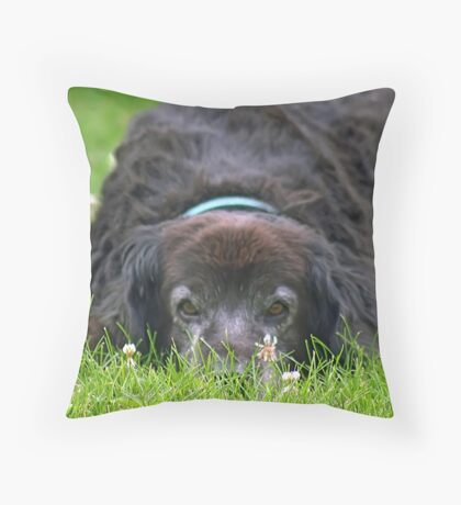 Sly Throw Pillow