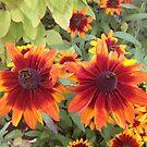 Mile End Flowers by NarrelleHarris