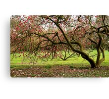 Nature´s tranquillity... Canvas Print