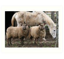 Ewe, Ewe and Horse Art Print