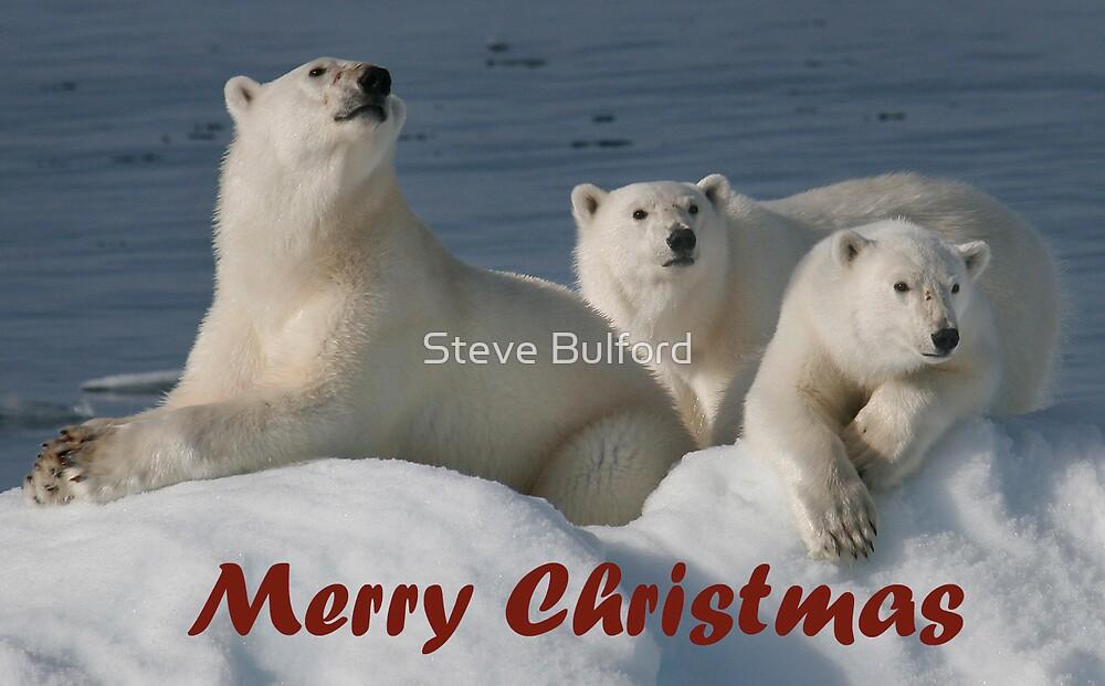 Bears On Ice - Christmas Card by Steve Bulford