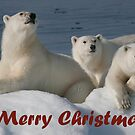 Bears On Ice - Christmas Card by Steve Bulford