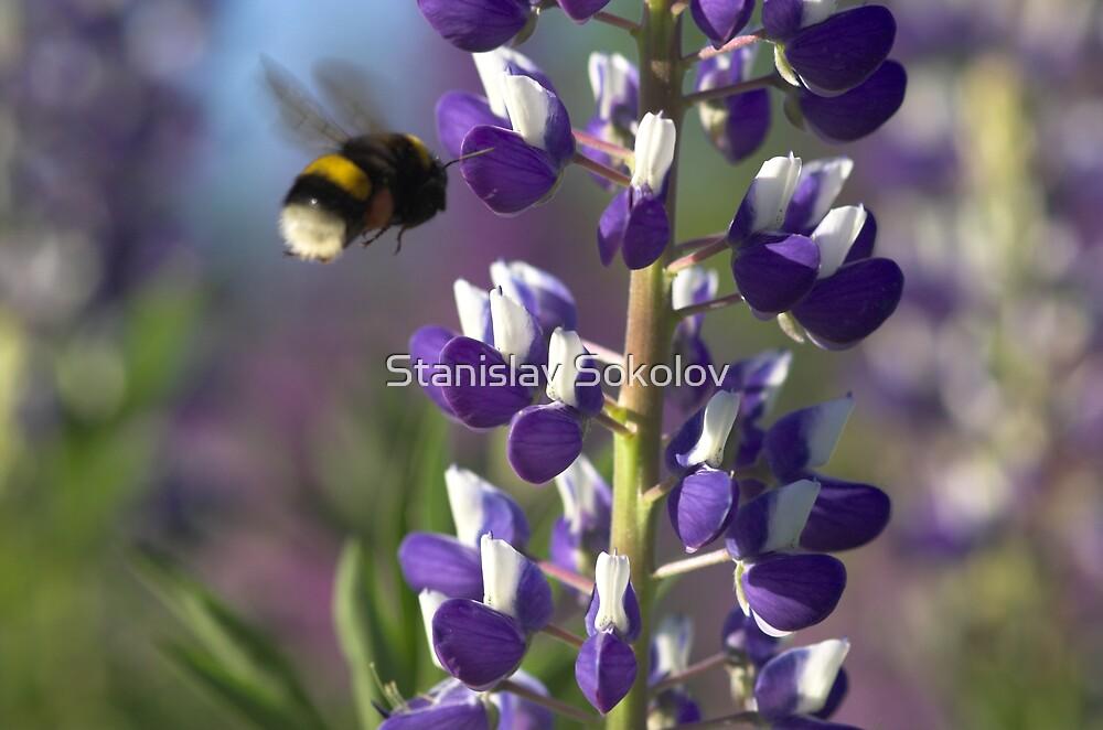 Lupin and Bumblebee  by Stanislav Sokolov