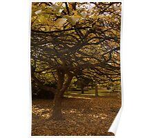 Autumn glade. Poster