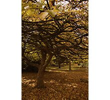 Autumn glade. Photographic Print