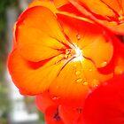 Red Flower by Arissa