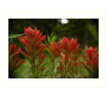 Scarlet Paintbrush Flowers Art Print
