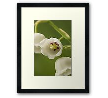 Lilly-of-the-Valley Macro  Framed Print