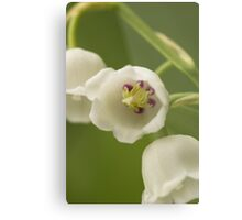 Lilly-of-the-Valley Macro  Metal Print