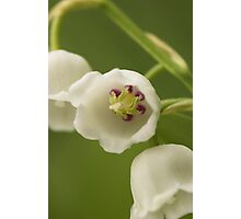 Lilly-of-the-Valley Macro  Photographic Print
