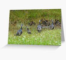 Wild Turkeys Greeting Card