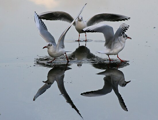 Dancing On Ice by Robert Abraham
