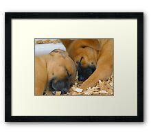 Sleeping Puppy's Framed Print