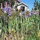 Heather's Garden by pfeifferphotos
