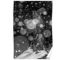 Spirit Bear in Snowstorm Poster