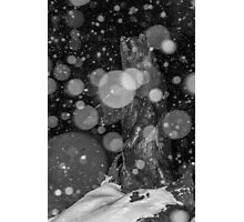 Spirit Bear in Snowstorm Photographic Print