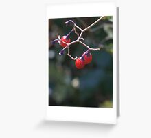 Berries on a Warm Autumn Day Greeting Card