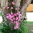 Pink Beauty !!! by Heabar