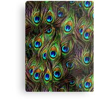 Peacock Feathers Invasion Metal Print
