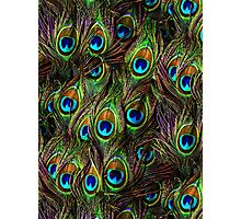 Peacock Feathers Invasion Photographic Print