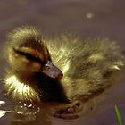 Just Ducky by DaveBuse