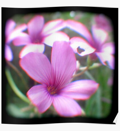 Garden of Weeds Poster