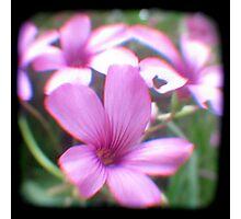 Garden of Weeds Photographic Print